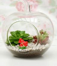Küçük elma terrarium 3 kaktüs  Ankara online çiçek gönderme sipariş