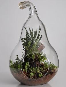 Armut cam küçük boy terrarium  Ankara çiçek servisi , çiçekçi adresleri