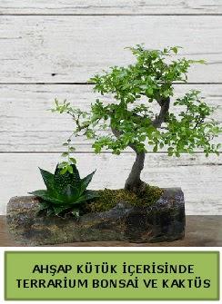 Ahşap kütük bonsai kaktüs teraryum  Ankara internetten çiçek siparişi