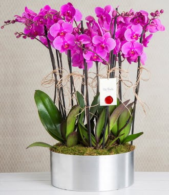 11 dallı mor orkide metal vazoda  Ankara çiçek gönderme sitemiz güvenlidir