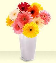 Ankara 14 şubat sevgililer günü çiçek  gerberalardan mika yada cam vazo tanzim