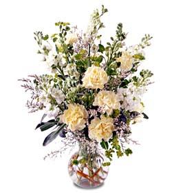 Ankara hediye çiçek yolla  cam yada mika vazoda sebboy karanfil özel