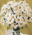 Ankara uluslararası çiçek gönderme  mika yada cam vazoda papatya tanzim