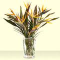 Ankara hediye çiçek yolla  Vazo içerisinde stariçe