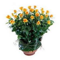 Ankara cicekciler , cicek siparisi  10 adet sari gül tanzim cam yada mika vazoda çiçek