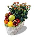 Ankara hediye çiçek yolla  meyva sepeti ve kalanche