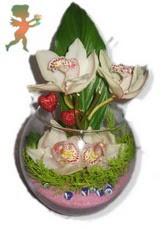 fanus içerisinde 4 orkide  Ankara internetten çiçek satışı
