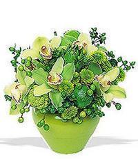 cam yada mika vazoda 5 adet orkide   Ankara online çiçekçi , çiçek siparişi