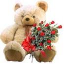 kocaman ayicik ve 10 gül   Ankara çiçek , çiçekçi , çiçekçilik