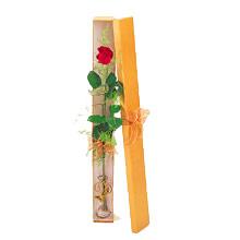 ince  kutuda  1  gül   Ankara çiçek yolla