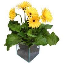 9 adet gerbera çiçegi ve cam tanzim  Ankara cicek , cicekci