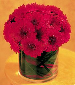 Ankara ucuz çiçek gönder  23 adet gerbera çiçegi sade ve sik cam içerisinde