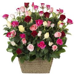 41 adet karisik gül sepeti   Ankara çiçek siparişi vermek