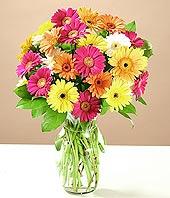 Ankara çiçek online çiçek siparişi  17 adet karisik gerbera