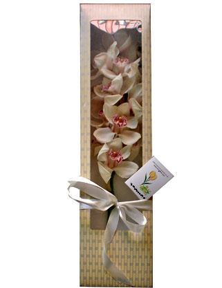 Ankara anneler günü çiçek yolla  ÖZEL SEVENLERE 1 DAL ORKIDE