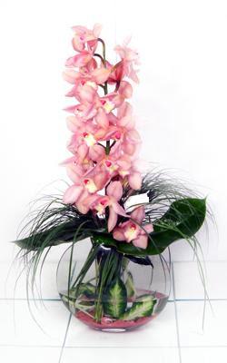 Ankara internetten çiçek siparişi  cam içerisinde tek dal orkide