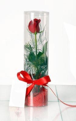 Ankara çiçek yolla  Silindir vazoda tek kirmizi gül