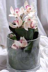 Ankara internetten çiçek siparişi  Cam yada mika vazo içerisinde tek dal orkide