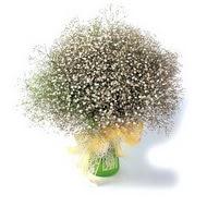 Ankara çiçek mağazası , çiçekçi adresleri  cam yada mika vazo içerisinde cipsofilya demeti