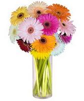 Ankara internetten çiçek siparişi  Farkli renklerde 15 adet gerbera çiçegi