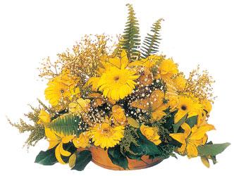 Ankara çiçek siparişi sitesi  sapsari kir çiçekleri tanzimi