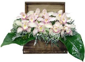 Ankara ucuz çiçek gönder  sandik içerisinde 1 dal orkide