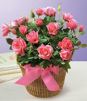 Anneme 12 adet sepet içerisinde kirmizi gül  Ankara çiçek gönderme