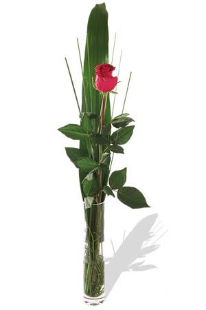 1 adet cam vazo içerisinde kirmizi gül  Ankara çiçek , çiçekçi , çiçekçilik