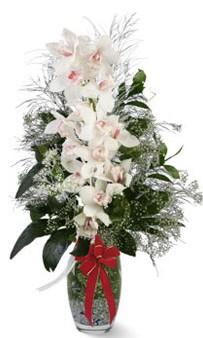 Ankara çiçek siparişi sitesi  cam içerisinde 1 dal orkide çiçegi
