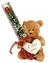 15 cm ayicik ve tek kutu gül  Ankara uluslararası çiçek gönderme