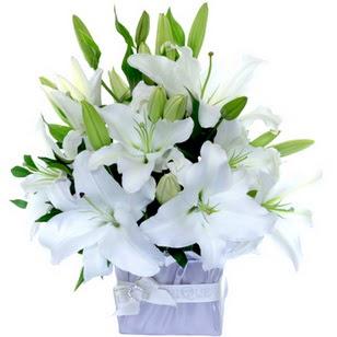 Ankara çiçek yolla  2 dal cazablanca vazo çiçeği