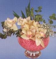 Ankara çiçek mağazası , çiçekçi adresleri  Dal orkide kalite bir hediye
