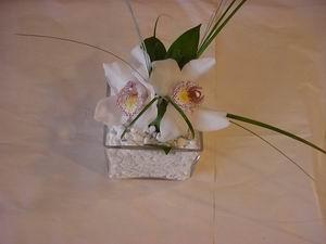 Ankara çiçek servisi , çiçekçi adresleri  Iki adet kaliteli bir orkide