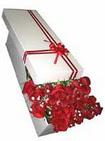 Ankara çiçekçi telefonları  11 adet 1.kalite magnum güller