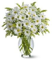 Vazo içerisinde beyaz krizantem çiçekleri  Ankara çiçekçi mağazası