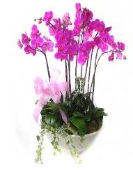 9 dal orkide saksı çiçeği  Ankara güvenli kaliteli hızlı çiçek