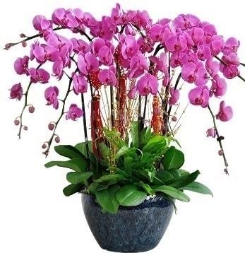 9 dallı mor orkide  Ankara 14 şubat sevgililer günü çiçek