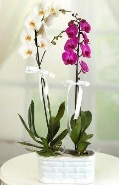 1 mor 1 dal beyaz İthal orkide sepet içerisinde  Ankara çiçek mağazası , çiçekçi adresleri