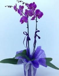 2 dallı mor orkide  Ankara kaliteli taze ve ucuz çiçekler
