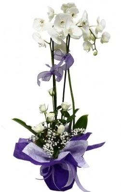 2 dallı beyaz orkide 5 adet beyaz gül  Ankara çiçekçi mağazası