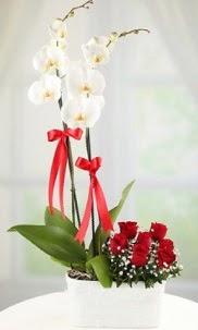 2 dallı beyaz orkide ve 7 kırmızı gül  Ankara İnternetten çiçek siparişi