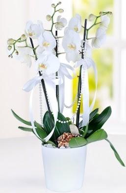 3 dallı beyaz orkide  Ankara çiçek yolla