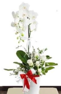 Tek dallı beyaz orkide 5 beyaz gül  Ankara çiçek siparişi sitesi