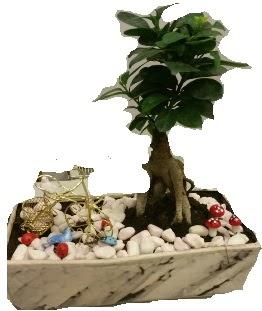 Japon ağacı bonsai satışı  Ankara anneler günü çiçek yolla