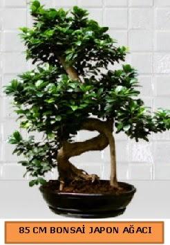 85 CM Japon ağacı Bonsai saksı bitkisi  Ankara ucuz çiçek gönder