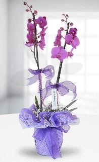 Çift dallı mor orkide LİKE MARKADIR  Ankara anneler günü çiçek yolla