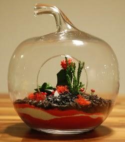 Elma Terrarium 3 kaktüs orta boy  Ankara 14 şubat sevgililer günü çiçek