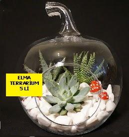 5 kaktüslü Elma terrarium orta boy  Ankara online çiçek gönderme sipariş