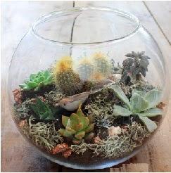 Cam fanusta 7 kaktüslü terrarium  Ankara çiçekçi mağazası