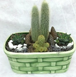Seramik içerisinde 5 kaktüslü terrarium  Ankara çiçek gönderme sitemiz güvenlidir
